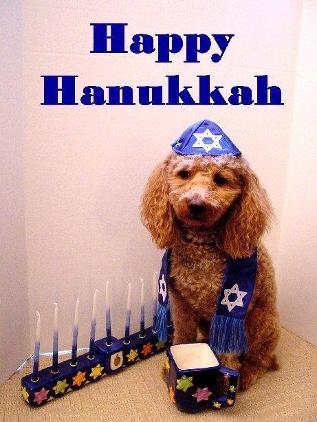 Las mejores fotos de feliz hanukkah enviar por whatsapp perro