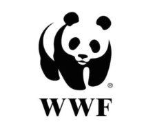 Lista de ONGs para hacer donaciones Online