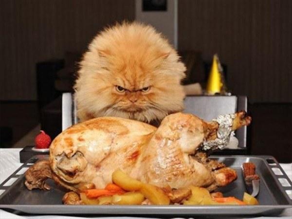 los-mensajes-de-whatsapp-y-email-mas-divertidos-de-accion-de-gracias-thanksgiving-day-2015-foto-gato-pavo