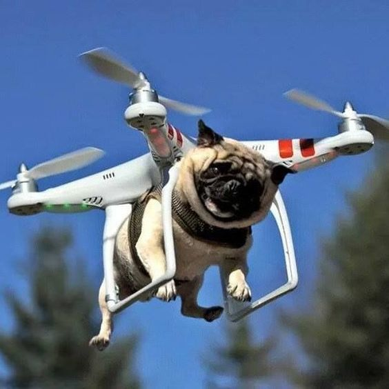 como-hacer-un-dron-perro